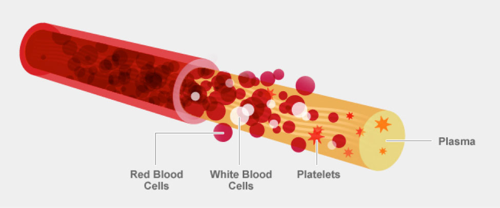 What is Blood? | OneBlood
